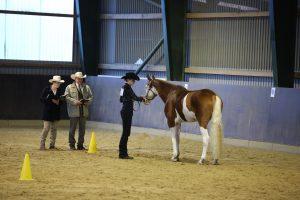 Bei der Showmanship wird das Pferd am Halfter vorgestellt (Foto: Privat)