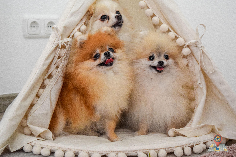 Die Hunde von Andre Padecken und Sandra Drolshagen aus Oldenburg (Bild: Chelsy Haß)